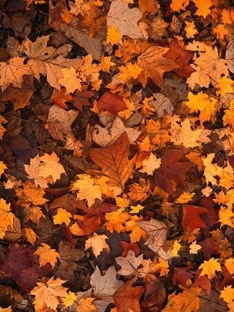 Teich im Herbst Herbstblätter