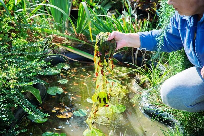 Algen entfernen im Teich