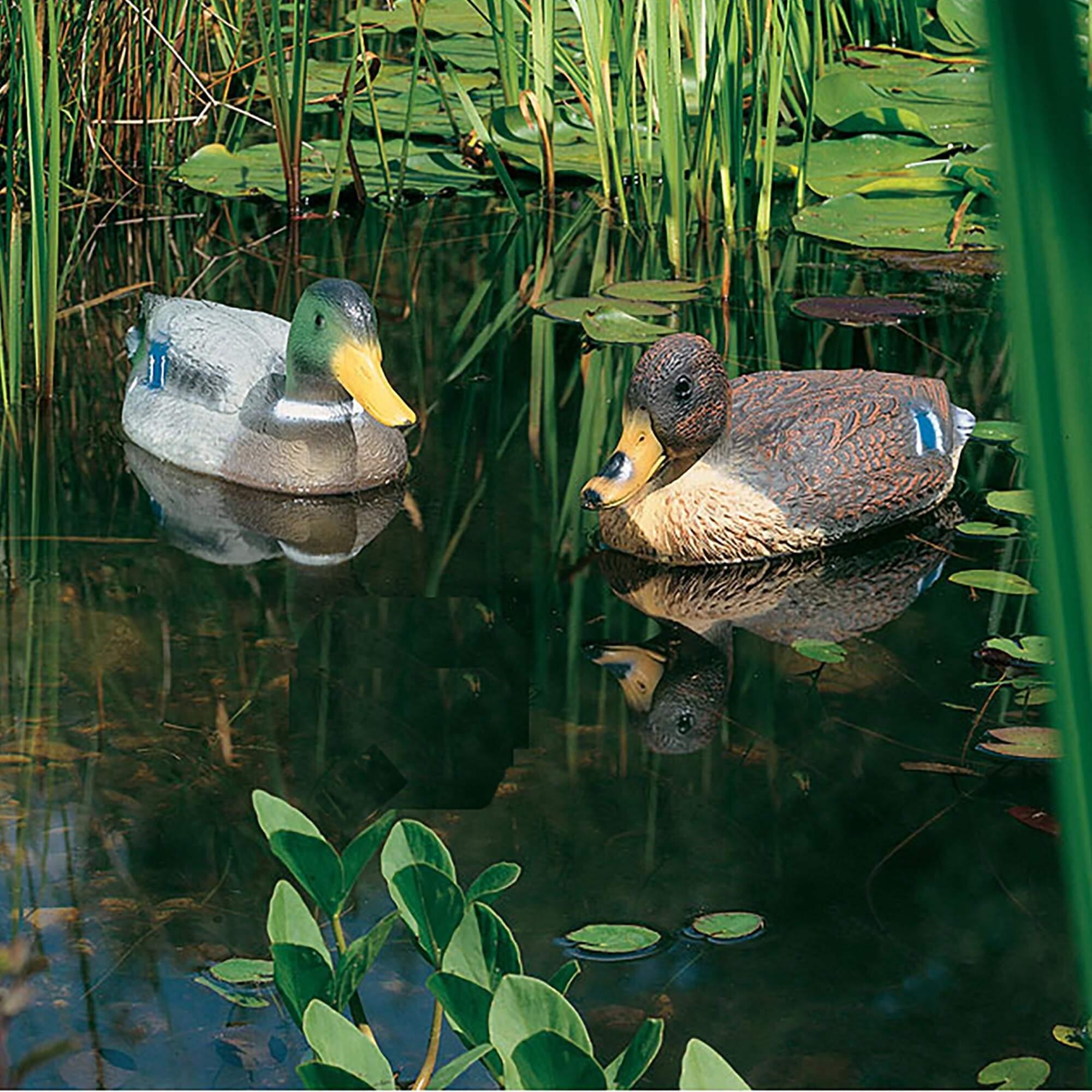Heissner Ente und Erpel