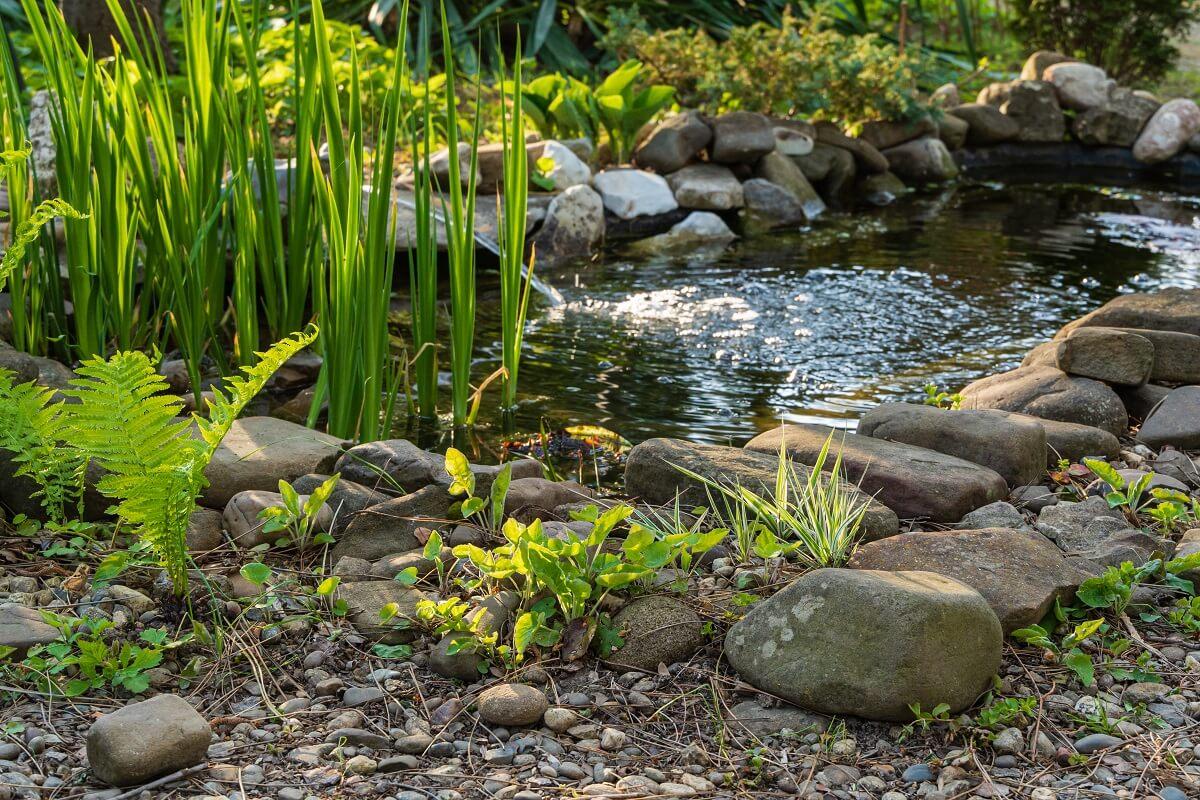 Pflege Teich im Sommer